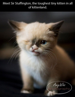 Meet Sir Stuffington the one eyed pirate cat – toughest kitten in ...