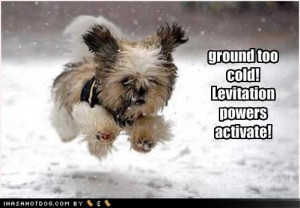 Funny dogs running snow image photo picture