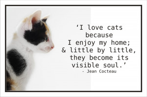 code spc02 i love cats because i enjoy my home little by little they ...