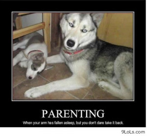 Parenting level dog - Funny Pictures, Funny Quotes, Funny Videos ...