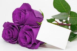 Roses Magnificent Purple Roses