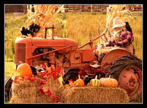 halloween_on_the_farm_by_teaphotography-d31s9p8.jpg