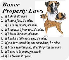 Funny Dog Memes Boxer Boxer property laws (also the