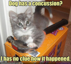 dog quotes funny. to sleep. dog quotes funny