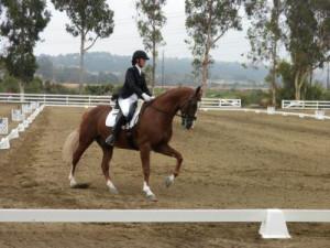 ... com/ca/san-diego/horseback-riding/fei-dressage-hunter-jumper-training