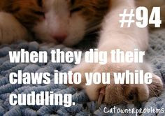 Cat Owner Problem # 94: When they dig their claws into you while ...