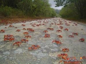 Funny crab cartoon stock vector clipart, Vector Illustration Of Funny ...