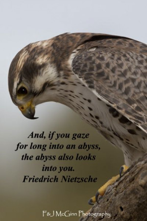 ... watchful prairie falcon by Florence McGinn -- Explore nature quotes at