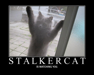 Stalkercat