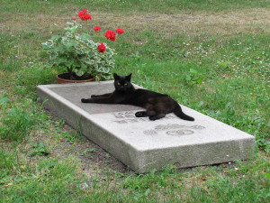 The Grieving Cat Grave