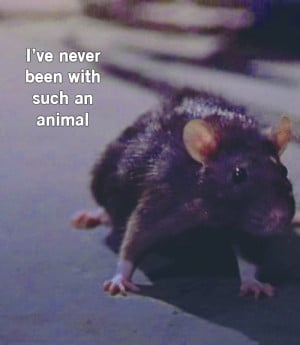Get it? Cos it's the Buffy-Rat? Oh, Ellen , you are ever the joke ...