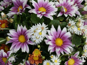flower daisy flower daisy flower daisy flower daisy flower quotes ...