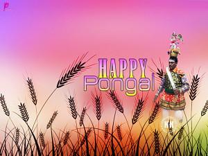... Messages Picture Happy Harvest Festival Celebration Pongal South India