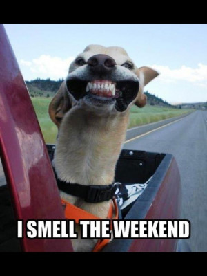 Pictures Friday Funny Happy Quotes Dogs Kootation