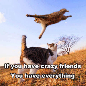 ... Funny Pictures // Tags: Funny cats - Crazy friends // October, 2013