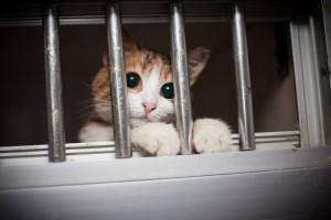 Animal Rights homeless animals in turkey