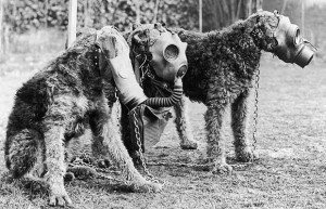 World War 2: Three Airedale dogs wearing their special gas masks at a ...