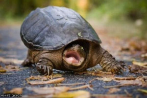 Turtle Funny Info & Pictures-Images