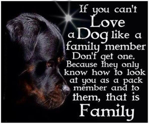 For our furry members of the family