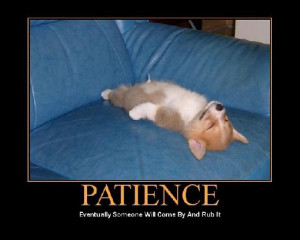 ... patience quotes funny have patience islamic quotes quote patience