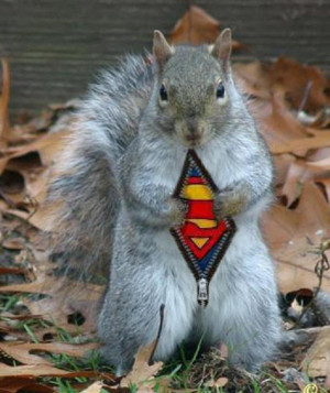 This particular squirrel decided one day that he was going to go down ...