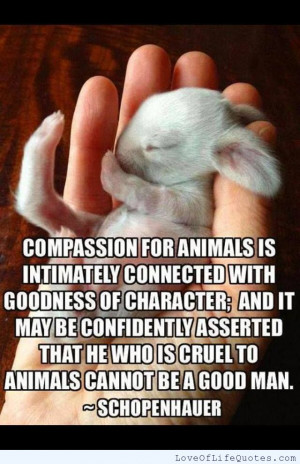 Schopenhauer quote on compassion - Love of Life Quotes
