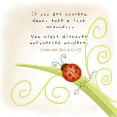 ladybug surround. Ladybug Poems, Poems Prints, Lady'S Bugs, Ladybugs ...