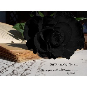 black rose with quote