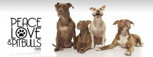 my american pitbull pitbull love i love my pitbulls 116i love pitbull ...