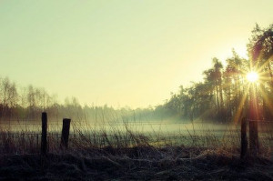 50 Magical Examples of Misty Morning Photography | Inspiration
