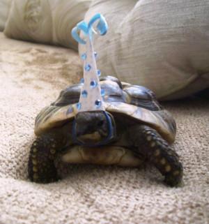Harvey the Turtle's 13th birthday.
