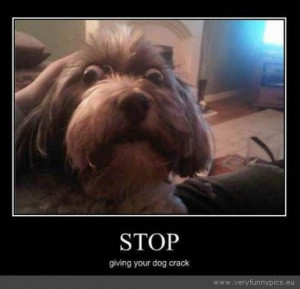 Funny Picture - Stop giving your dog drugs