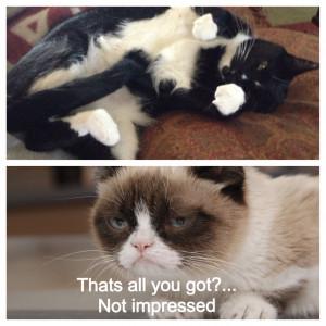 Grumpy Cat Quotes Titanic Grumpy cat quotes titanic.