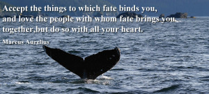 things to which fate binds you, and love the people with whom fate ...