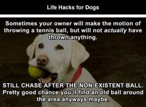 Dog life hacks2 Funny: Dog life hacks