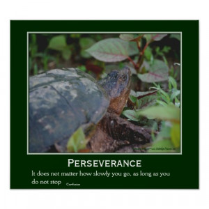 Perseverance Quote Turtle Motivational Inspirational Poster