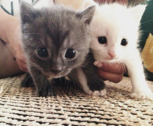 cats-holiday-gray-white-animal-kittens-summer-cat-little-pet-pets ...
