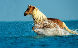 Home - Wallpapers / Photographs - Animals - Horse in the sea