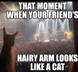Cat in Rock Concert
