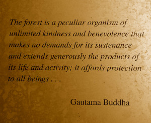 ... forest is a peculiar organism of unlimited kindness – Buddhist Quote