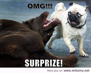 funny-dog-pictures-surprise-pug-funny-pictures_large.jpg