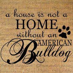 ... True, Luv My American, Animal, American Bulldog Quotes, 720621 Pixel