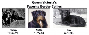 Queen_Victoria_Border_Collie_Sharp_Noble_and_Roy