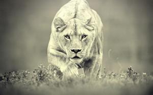 View Female Lion in full screen