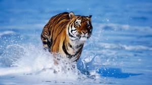 Wild Animals Wallpapers, Amazing Wildlife Animal Wallpapers
