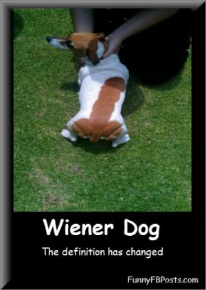 three musketeers wiener dog dachshund costume