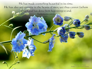 Bible Quote Beauty