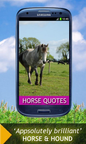 Cute Horse Quotes and Sayings