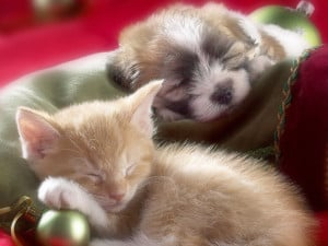 ... : Cat and Dog Pictures , Cats Pictures , Cute Kitten , Cute Kittens