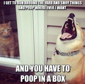 Funny dog and cat picture